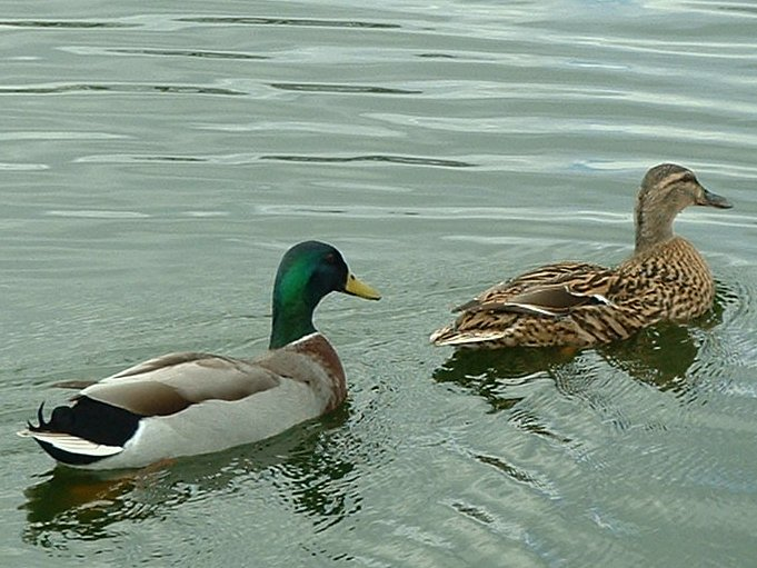 free online dating & chat in duck 100% free online dating in duck lake 1,500,000 daily active members.